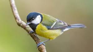 Vildtfugle